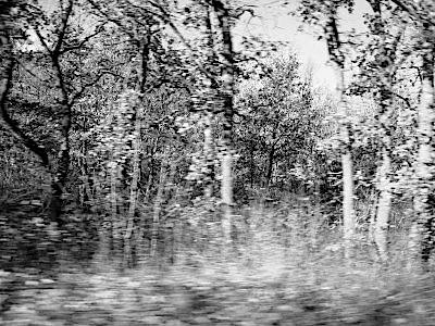 Carlo Bordini su «Cinque testi tra cui gli alberi (più uno)»